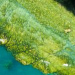 The Role of Algae in the Fight against Pollution